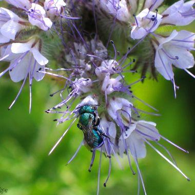Beautiful Blue Bug