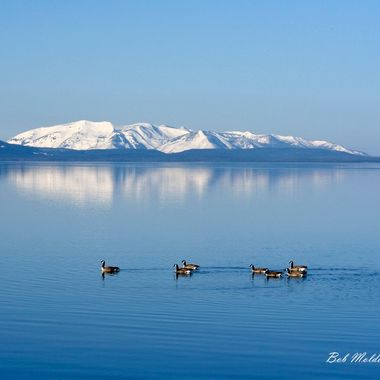 Geese on Yellowstone Lake.