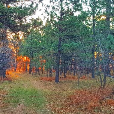 First light on opening day of hunting season in Wyoming Black Hills.