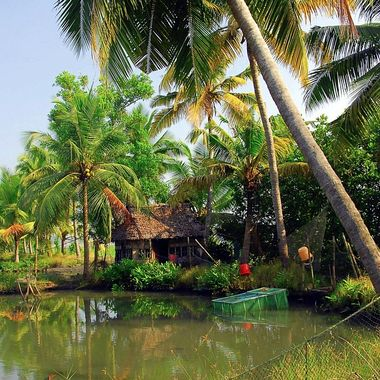 Coastal jungle of Southern India!