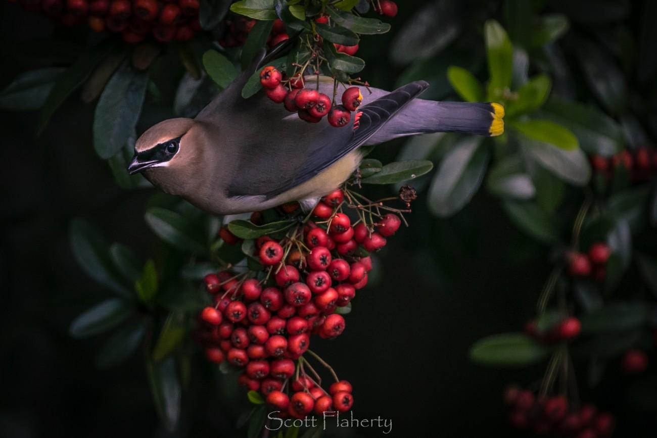 12+ Beautiful Shots Of Birds That Will Wow You