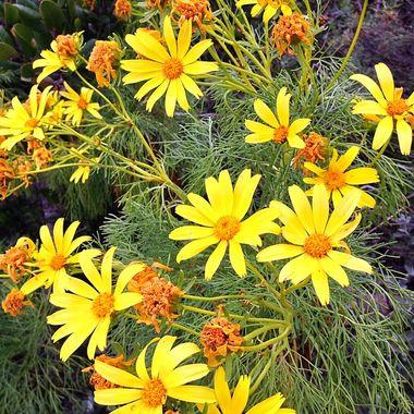 Malibu flowers!