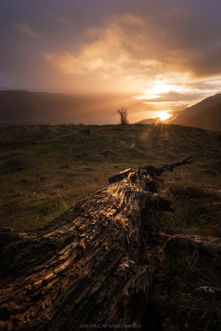 Rowena Crest Dramatic Sunrise by DreamCapturedImages - Fallen Trees Photo Contest