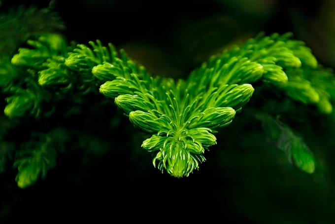 green from darkness  by Heniaczek - Image Of The Month Photo Contest Vol 31