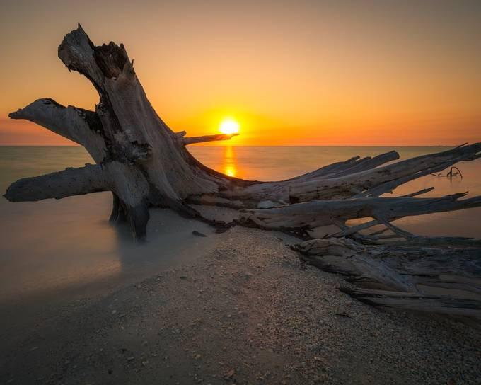 Sunset Hunting by natearnold - Fallen Trees Photo Contest