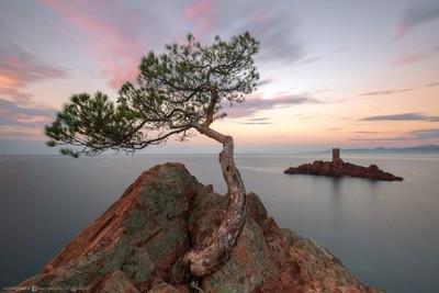 A lone pine of Mediterranean – Одинокая сосна Средиземноморья
