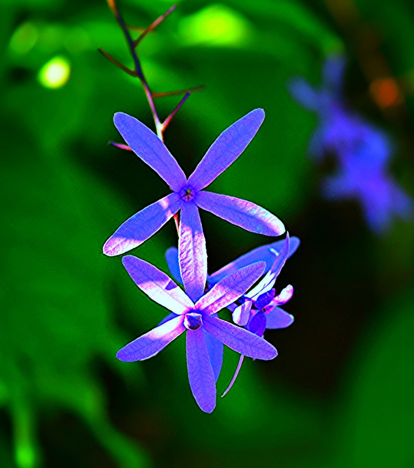 small purple blossoms