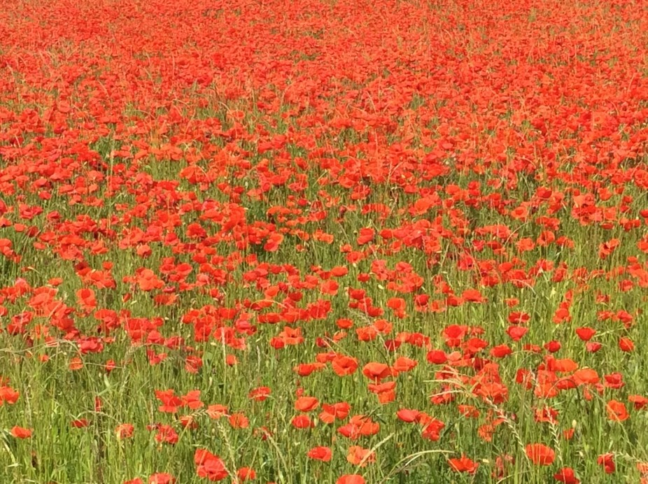 Travelling in Provence, I needed to stop to take this poppies field