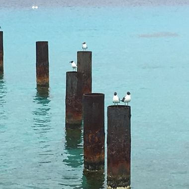 birds and sea 1