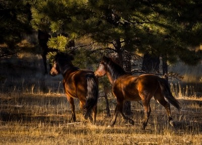 Forest Mare and Foal