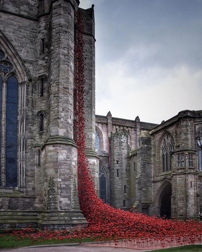 Weeping Window, Poppy display at Hereford Cathedral.
