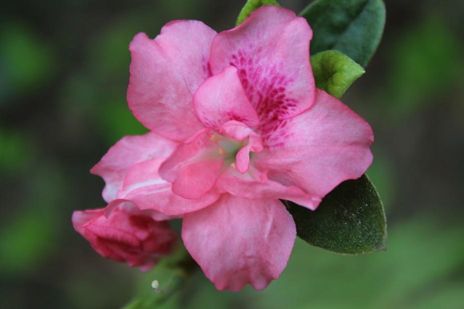 Tallahassee Spring #9