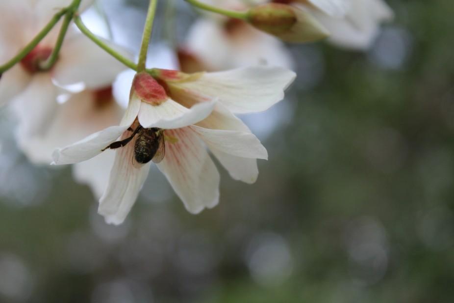 Tallahassee Spring #11
