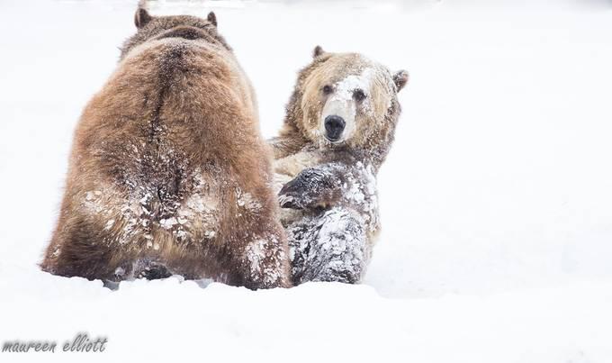 Morning Routine by maureenelliott - Winter Wildlife Photo Contest