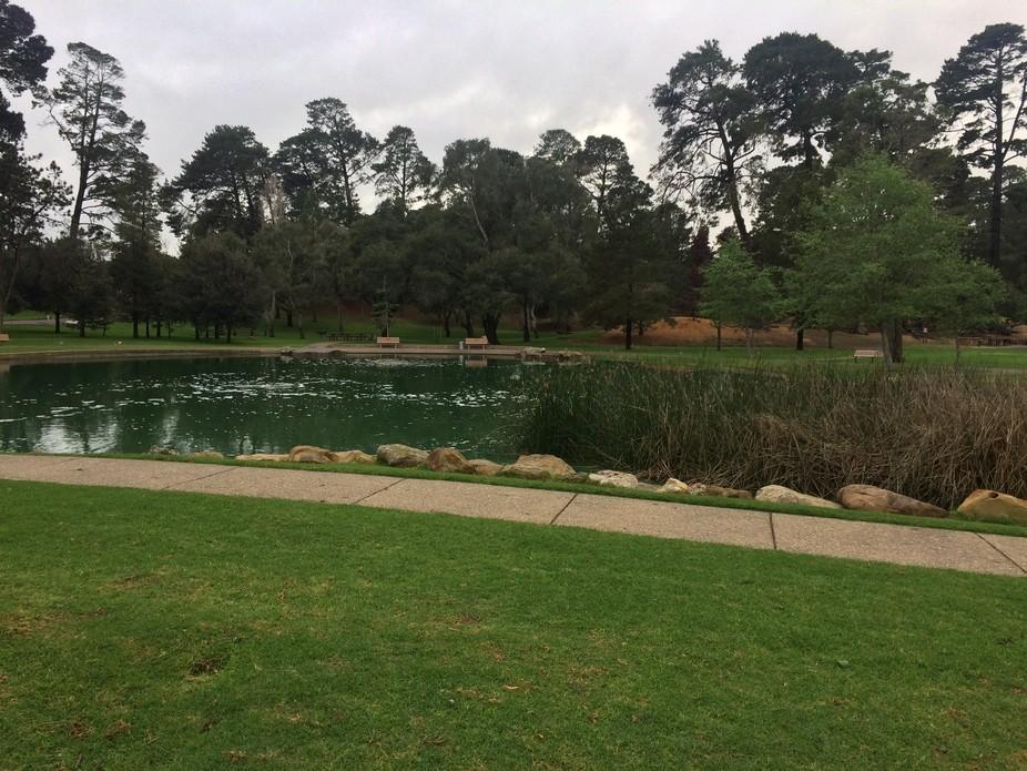 The beautiful local park. Amazing!