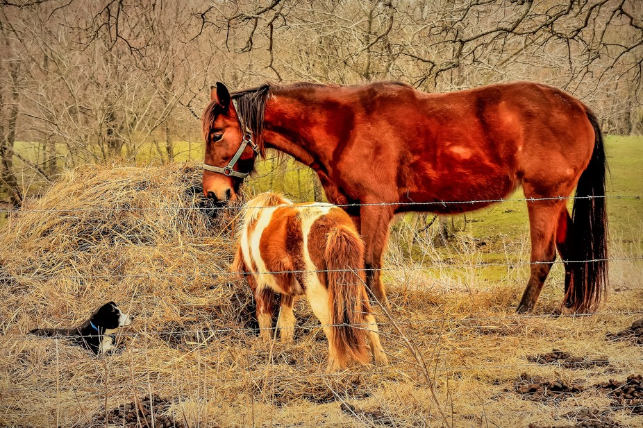 I was driving home from town and came across this farm scene. Here was the Mutt and Jeff of horse...