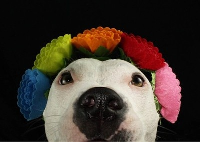 Nothing like a Pibble Party ????