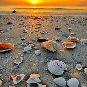 Awesome, Beach Life, Beautiful, Creative, Landscapes, Nature,,  Ocean, Natural lighting, Objects, Colorful, Water, Sea, Seashells, Bird, Photogra...