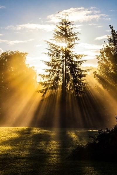 Shafts of golden light.