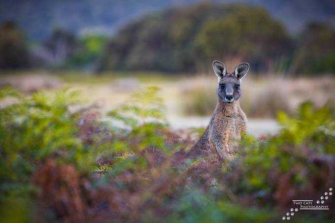 A Tassie Local by TwoCatsPhotography - Rule Of Thirds Photo Contest v4