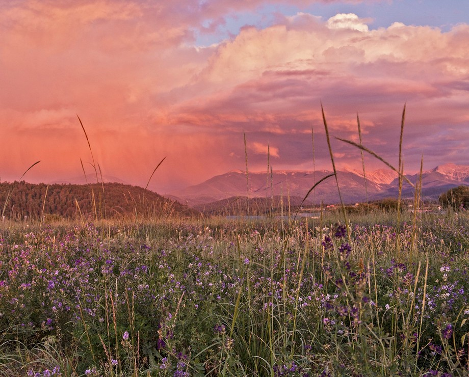 Early September---a profusion of alfalfa blossoms, and sunset light on the mist of a rainstorm over the Sangre de Cristo mountains (13,000-ft Truchas peaks are to the right of center). Details: Canon EOS 5D, Canon 28-135 mm lens at 90 mm. ISO 400, f/5.6, 1/160 sec.