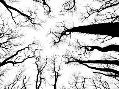 Boney Trees