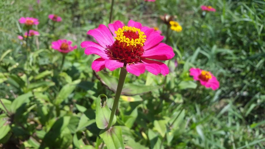 flor buket