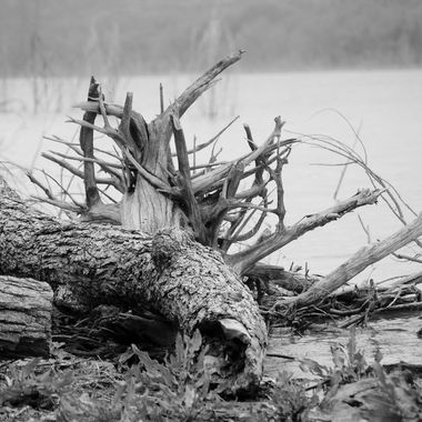Found this fallen tree while we were fishing on the Brazos river.