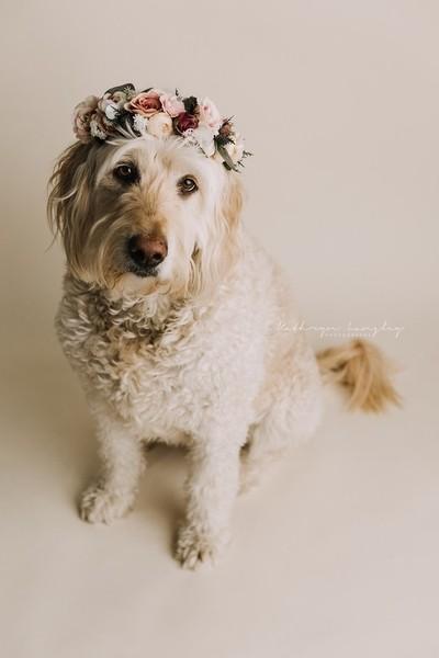 Charlotte Flower Crown