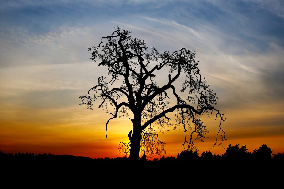 Gnarly lone tree