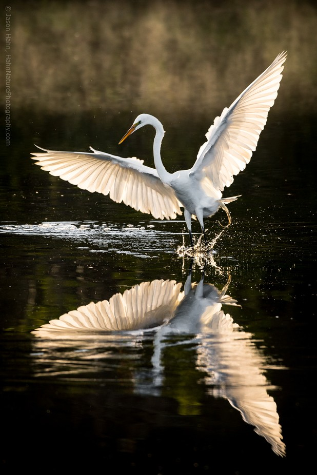 Great where flying and fishing by jasonhahn - Covers Photo Contest Vol 46