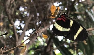Butterfly Stalking