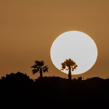 The sun goes down behind some palm trees in South Tenerife