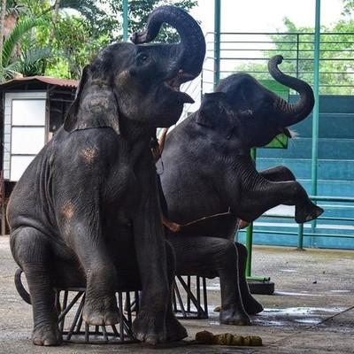 Khao Kheow Open Zoo & Night Safari . . . #nikon #pocket_family #travel #iganimal_snaps #travelgram #photooftheday #natgeo #phototag_it #nikonphotography #natgeotravelpic #igbest_macros #igbest #photography #lijunisy  #igbest_shotz #tbt #wcw #l4l #khao