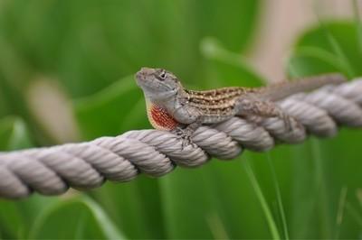 Gecko cruzing