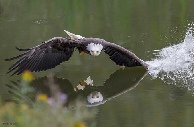 Reflections by Spider1987 - Wildlife And Water Photo Contest