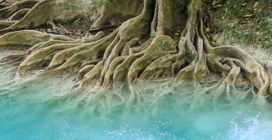 Erawan Falls park in central Thailand -ephemeral colours of the roots in the turquoise waters.