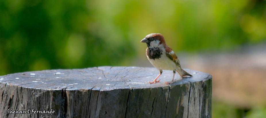 Birdy..