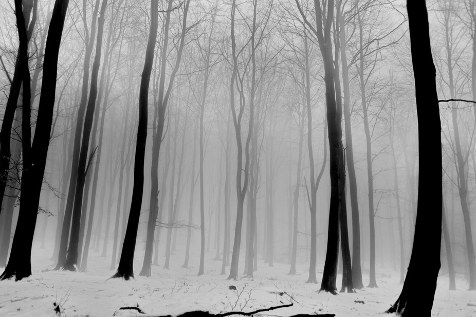 Just as the thaw was in progress, the warmth created this fog, Annesley woods Nottingham, Shown o...