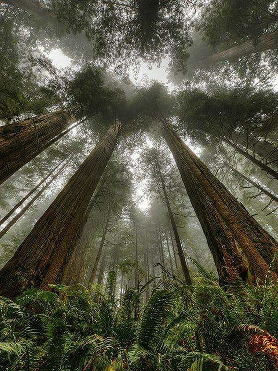 The giants by jameychaffin - Depth In Nature Photo Contest