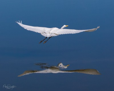 Wings and Reflection