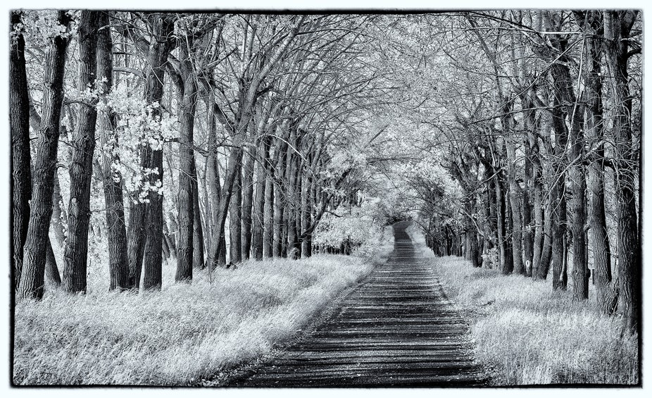 This is a beautiful driveway that I used to drive by frequently.  After a bit of observation and ...