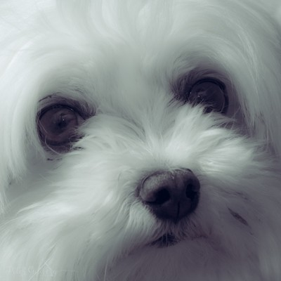 Coco, a mans best friend