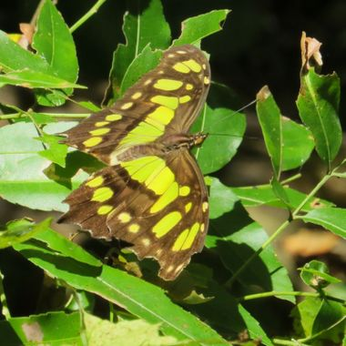 Butterfly, IMG_4300