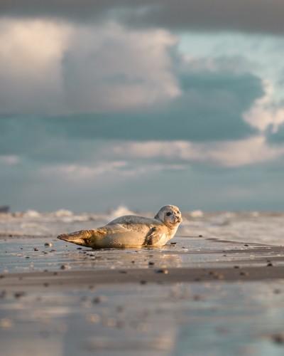 Morning seal