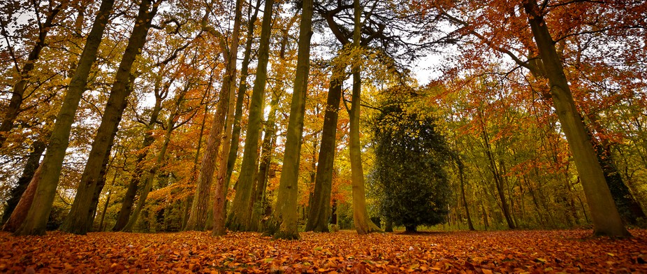 Taken during a walk in some local woodland last Autumn.