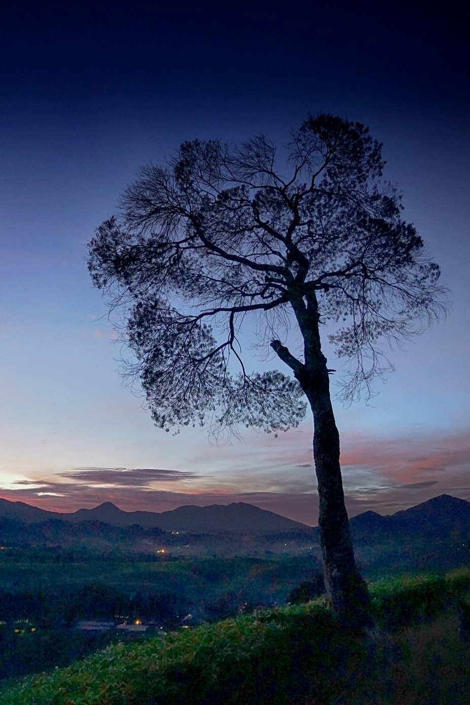 In the Morning by antonb - Tree Silhouettes Photo Contest