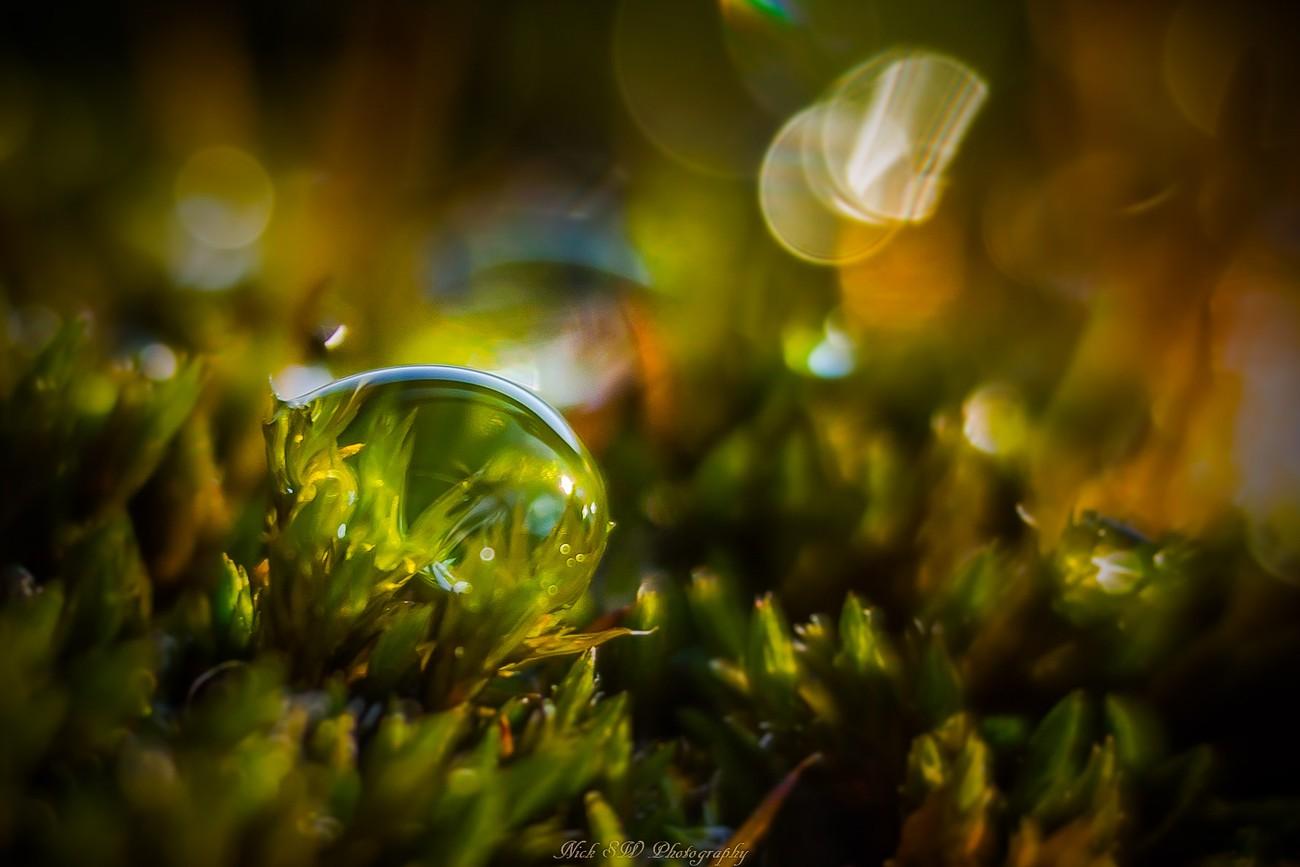 Morning Dew Photo Contest Winner
