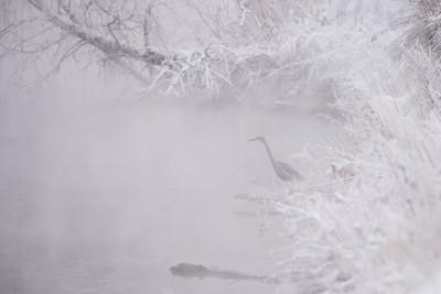 Mist heron