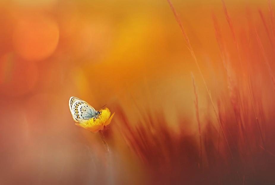 butterfly's mood